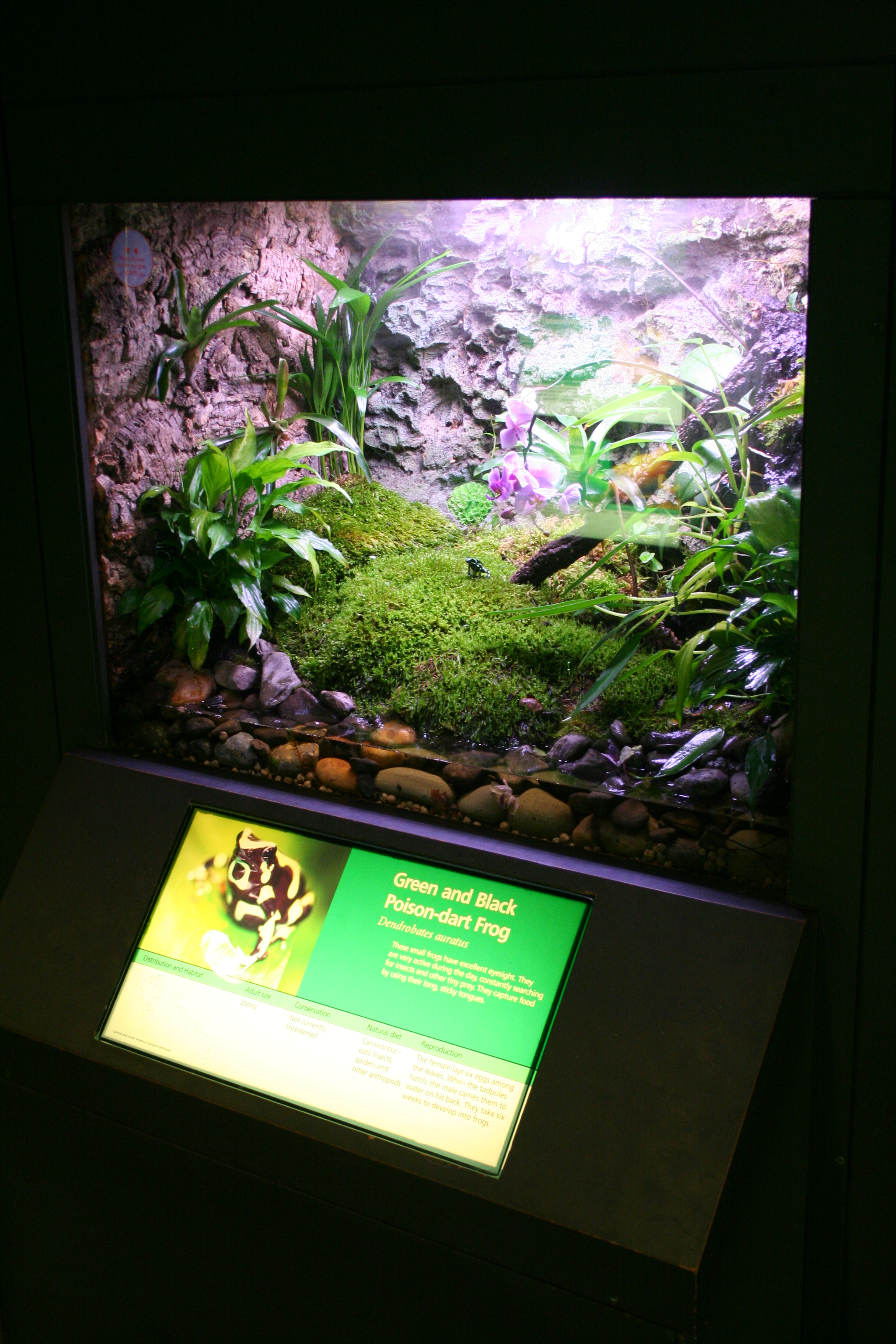 New Poison Dart Frog Exhibit Frog Blog Manchester