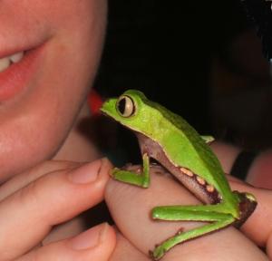 Manchester student with Phylomedusine treefrog