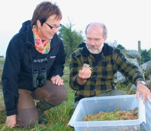 Susanne Forsater and Claes Andrén, Prefessor of Conservation Biology, releasing green toads bred at Norden's Ark
