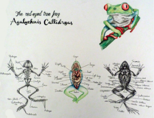 Tree_Frog_Daniel_Callaghan_Low_Res