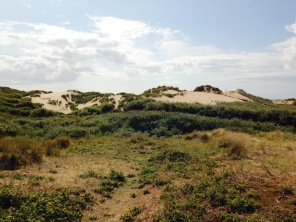 Dune habitat at Formby © Matthew O'Donnell