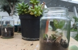 Upcycled container terrariums.