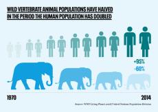 Graphic - human v animal population change no logo rectangle